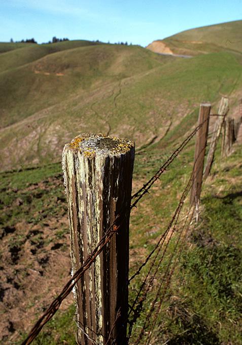 fence post along the coast