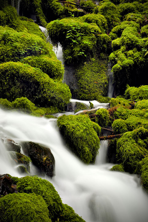 Mossy Falls Detail