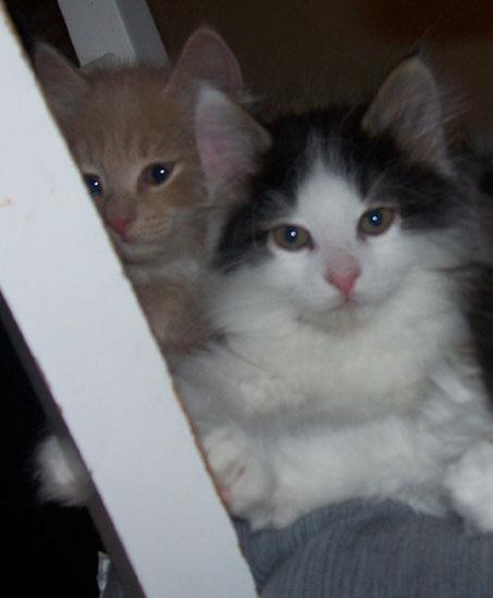 kattungarna 11-12v 078.jpg