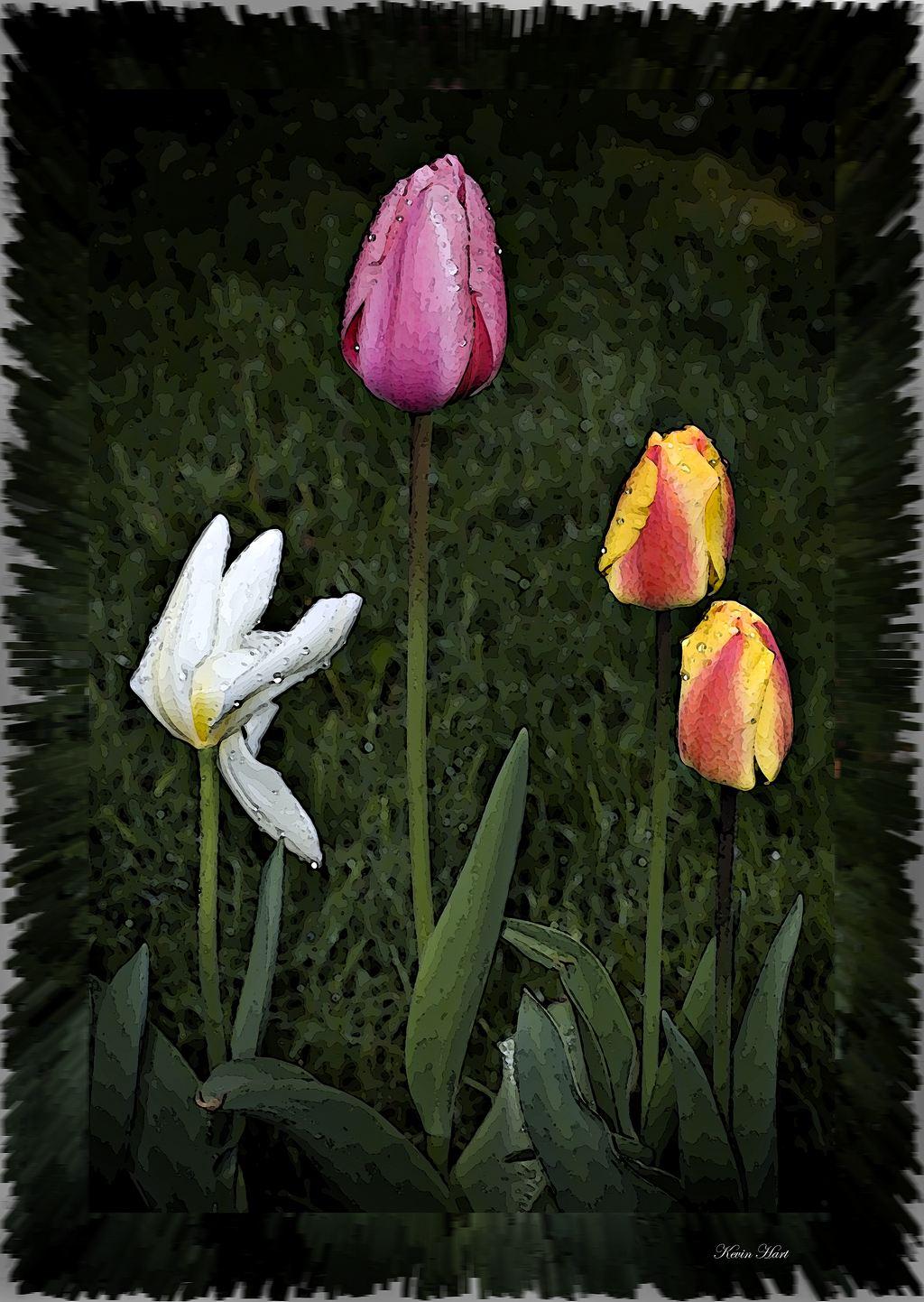 flowerabstract 32008_tn.jpg