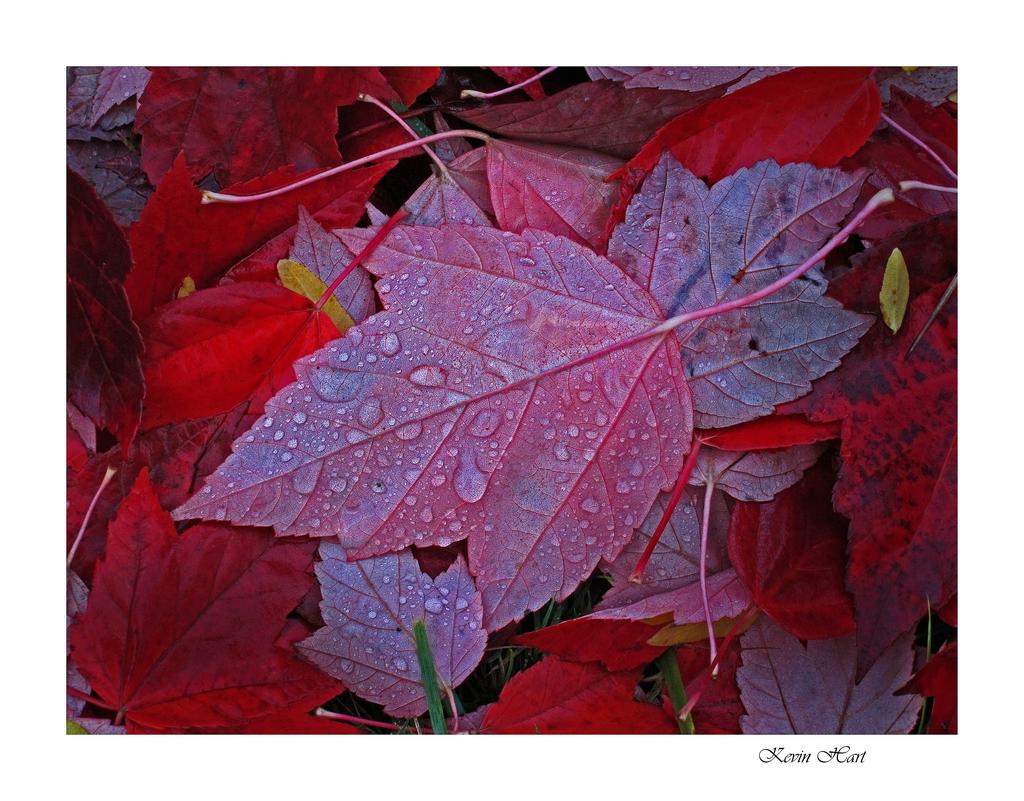red leaves s90_tn.jpg
