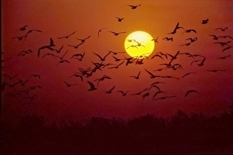 Seagulls at sunset.