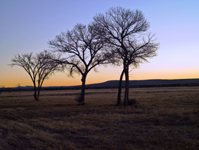0408BDA Three Trees.jpg