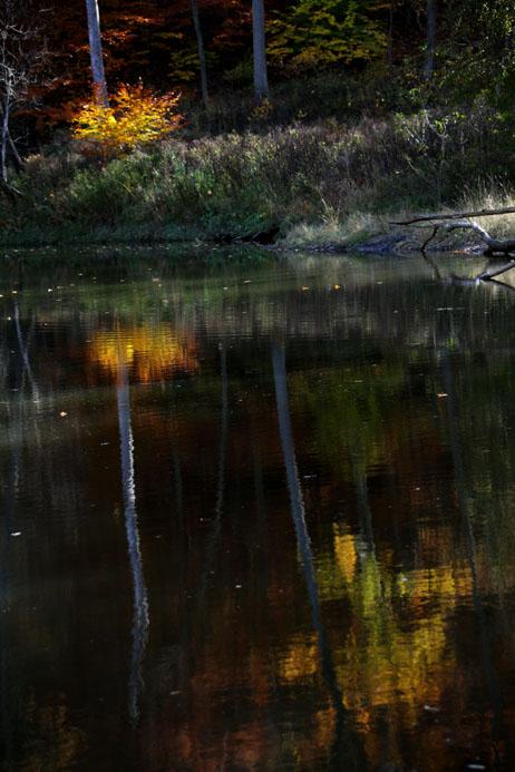 Tree reflection_5625 .jpg