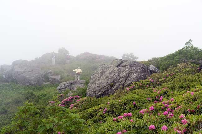 Roan Mountain 6