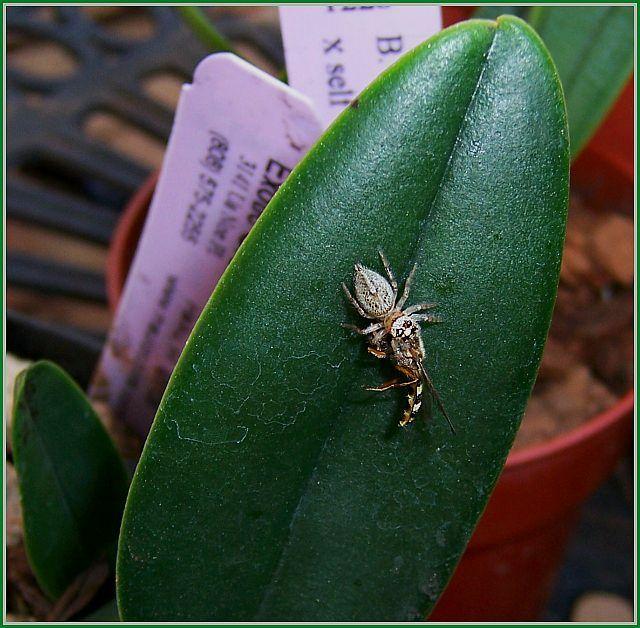 Hopper Eats Bee 2