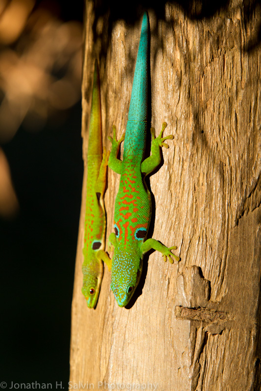 Madagascar-491.jpg