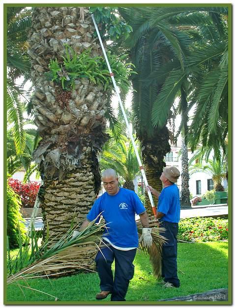 Palm pruners 1.jpg