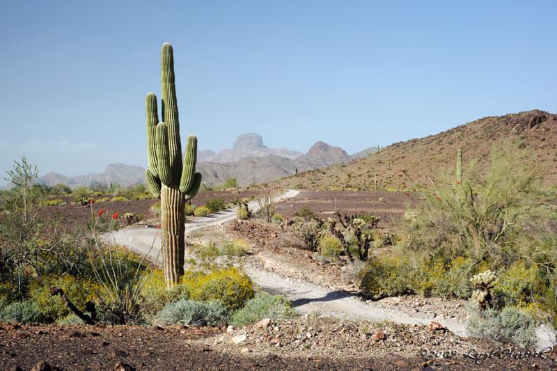 Saguaro View