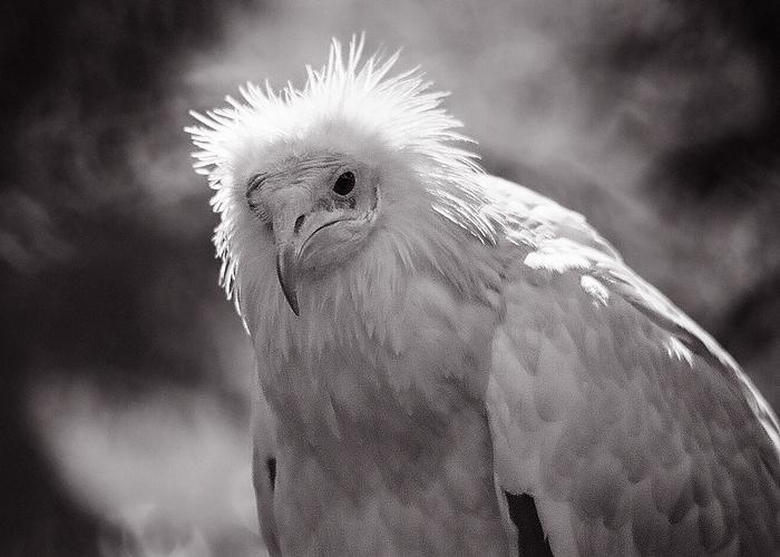 WAP Bird
