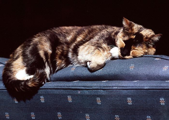 Sun Cat #3