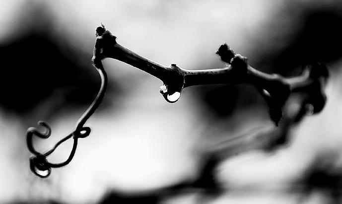 Vine Droplet.jpg