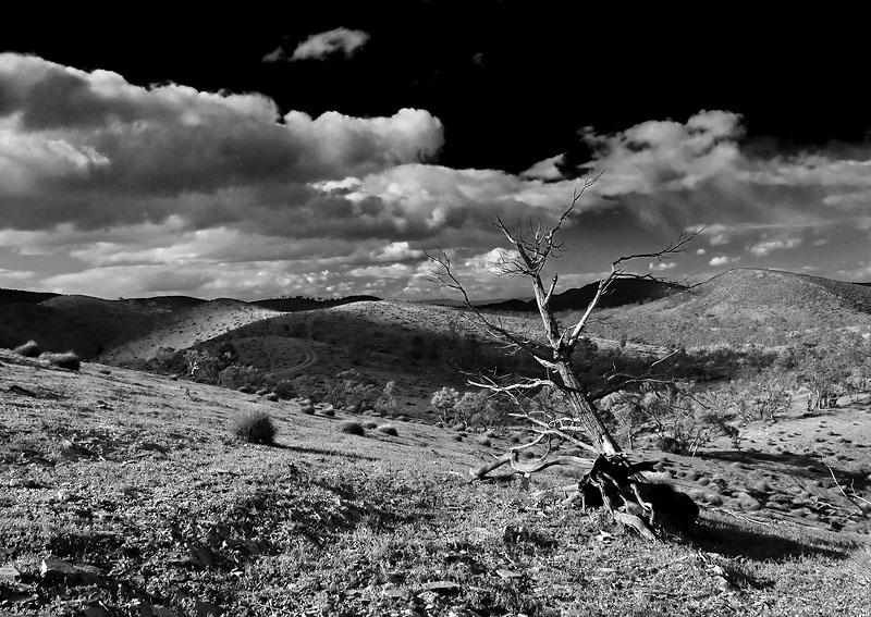 Sky Trek Willow Springs.jpg