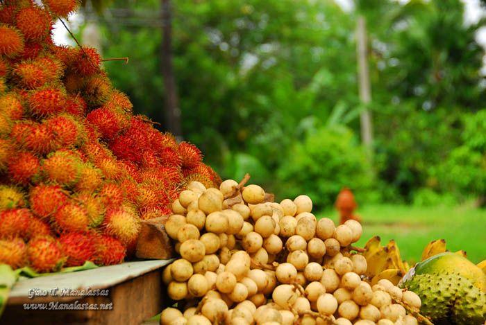 Rambutan, Lansones, Guyabano, Bananas etc.