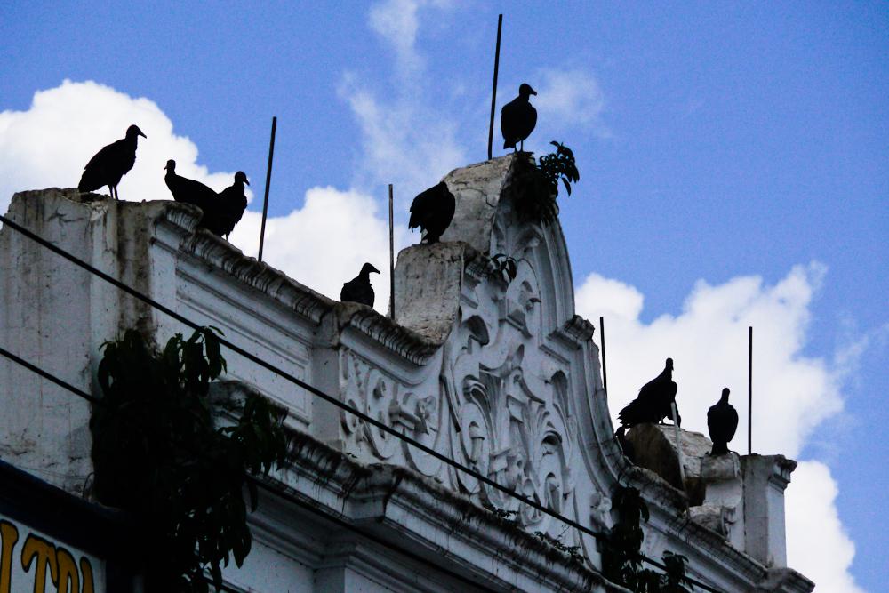 Dependence, Belem, Brazil, 2010