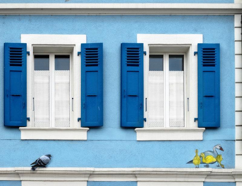 The ornithologist s windowsills....
