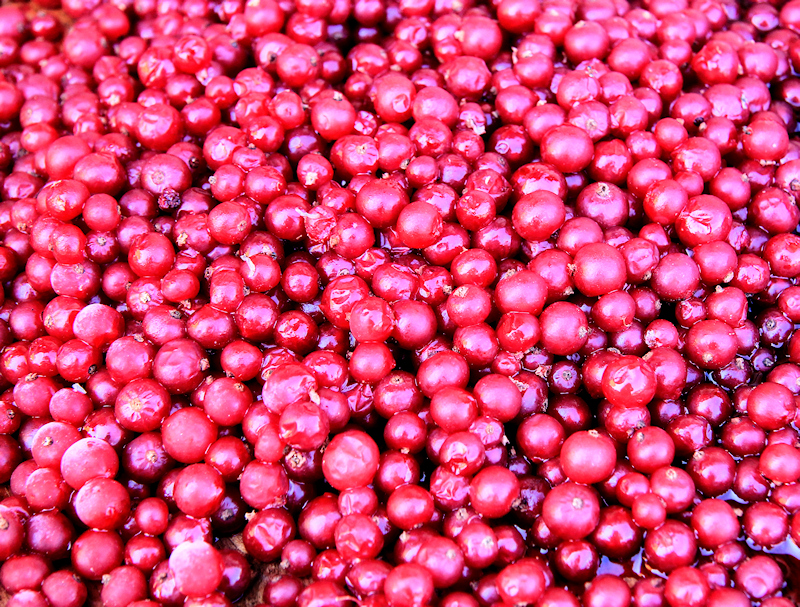 Red currants....