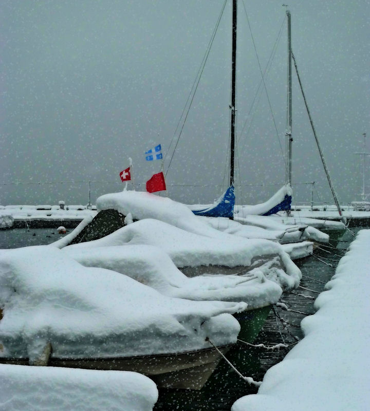 Frozen regatta....