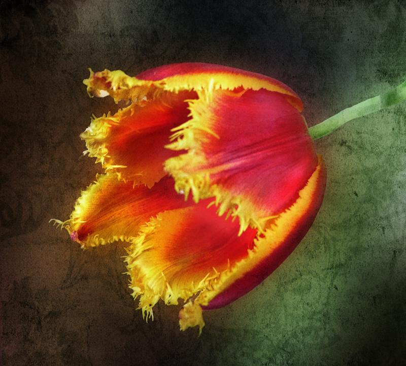 Whimsical tulip...