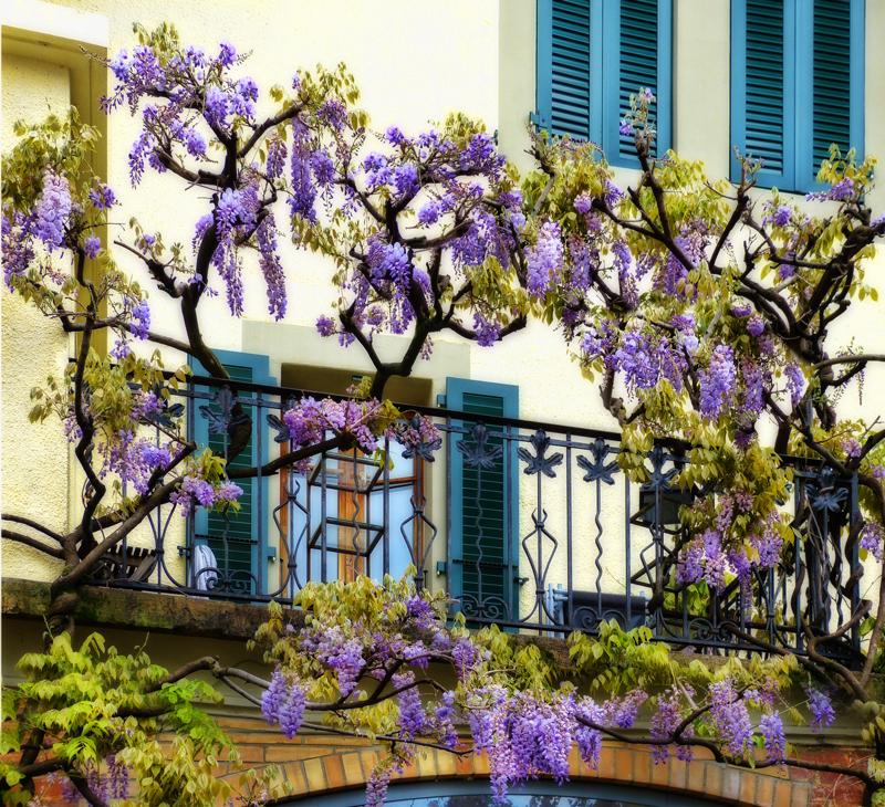 The balcony,,,