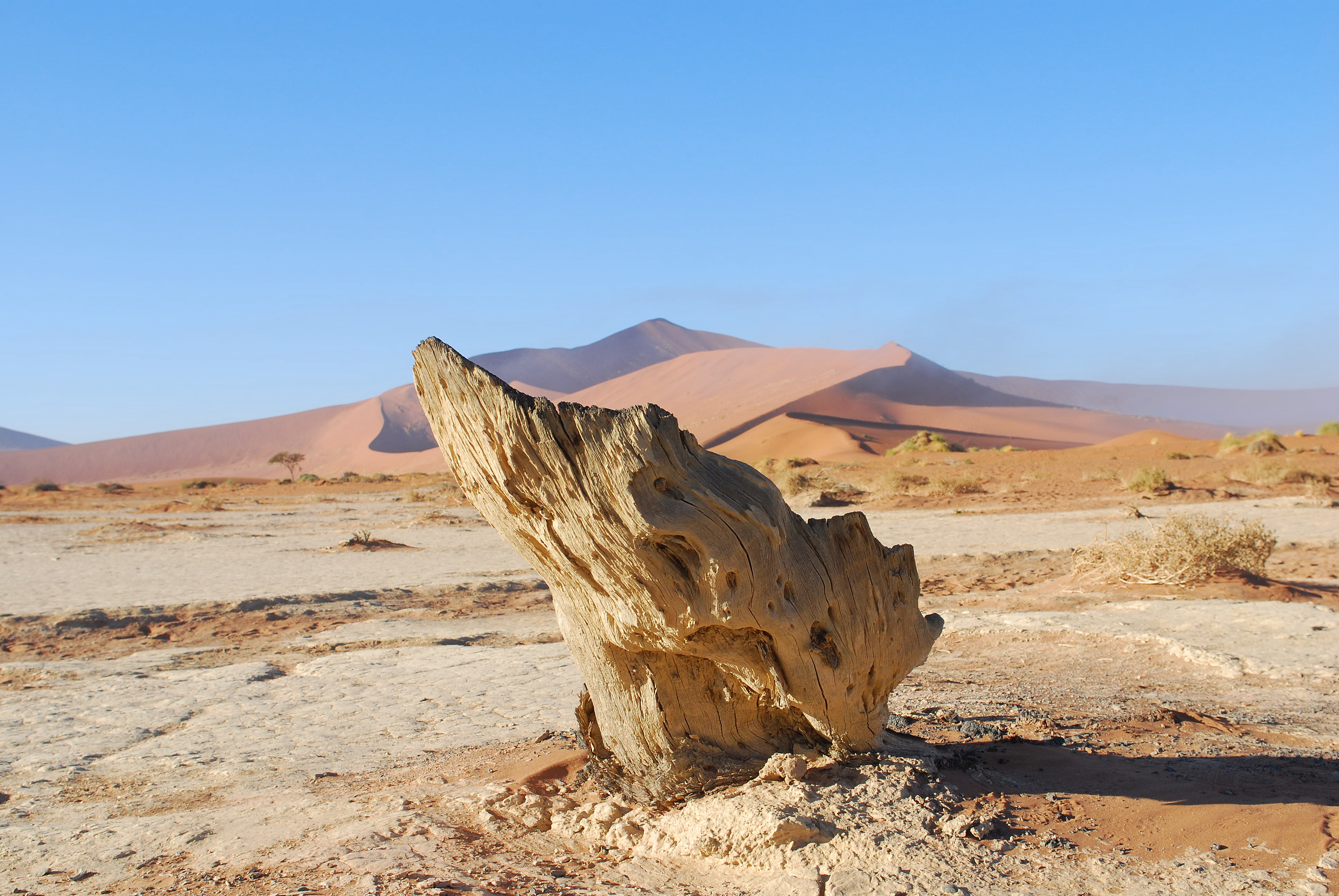 Namibian Centerpiece