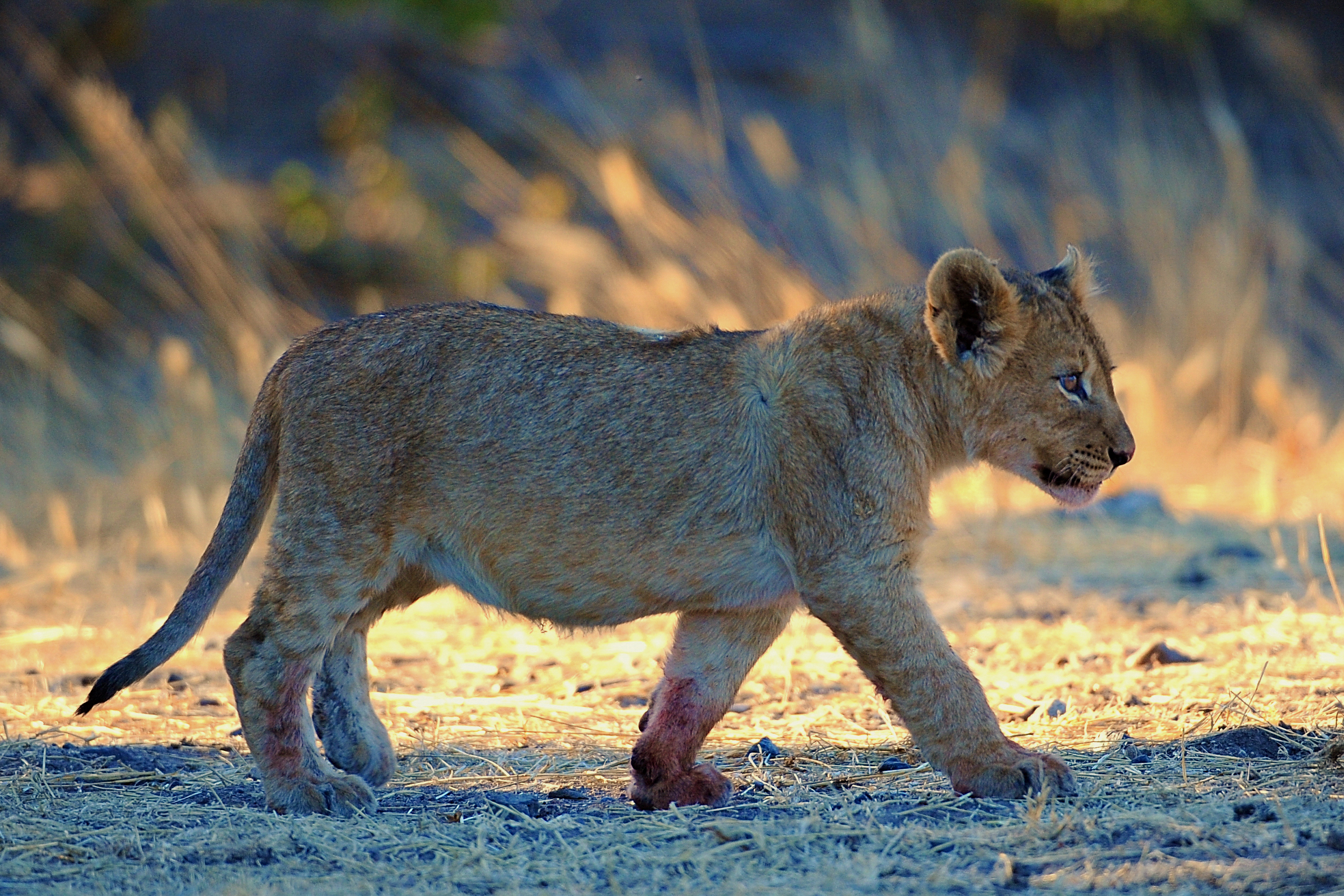 After Dinner Stroll (Namibia)