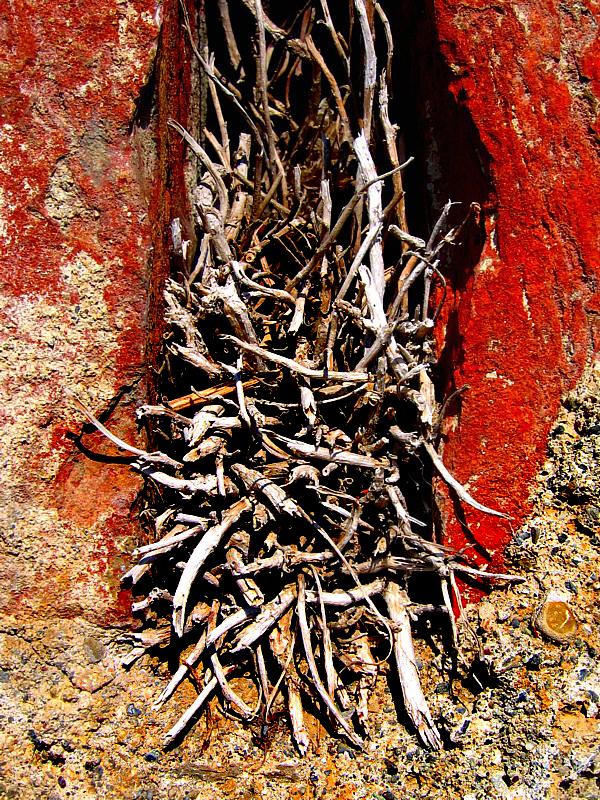 racines sèches dans mur rouille