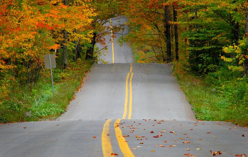 les feuilles sur la route