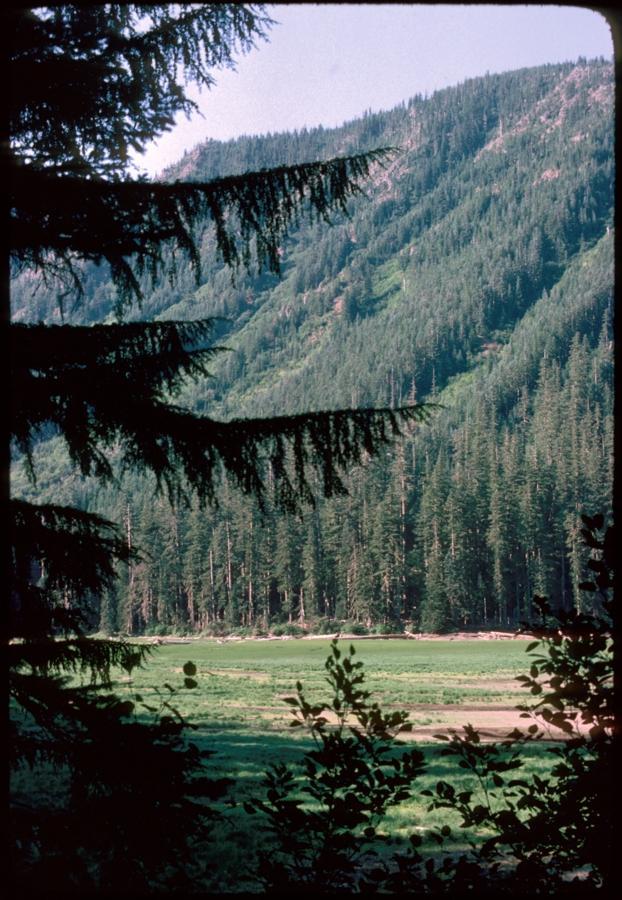 Mt Jefferson Wilderness and Pamelia Lake meadow 1977