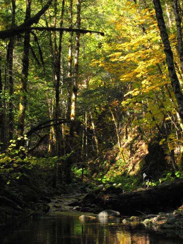 Early Fall colors on Little Grider Creek