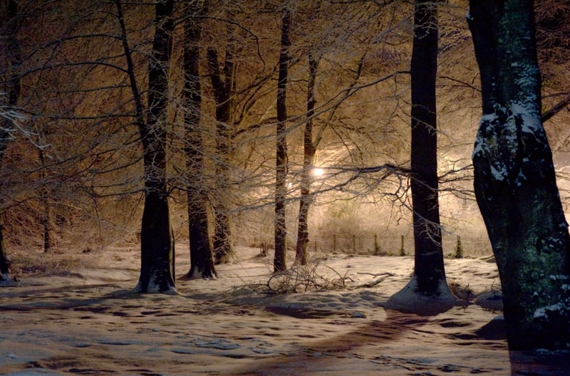 23rd January 2013 <br> frosty woods at night