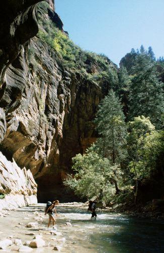 Wading Through the Narrows Gorge, Zion