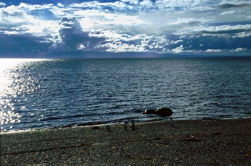 Penguins on the Beach, Seno Otway