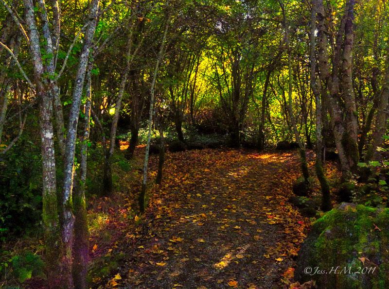 Autumn in the Marsh
