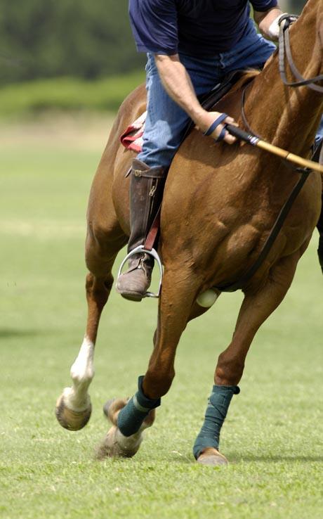 Ball Hits Horse