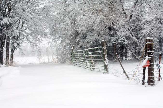 Horse Carral Fence