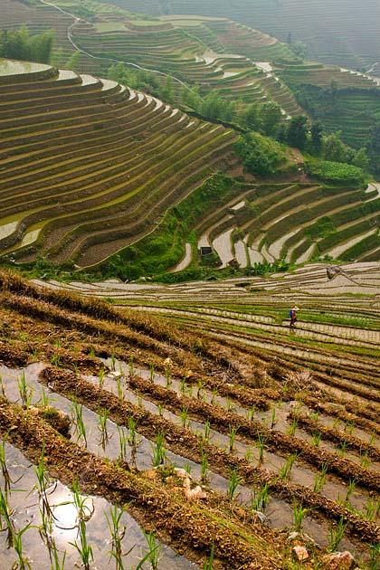 Rice Terraces, Longsheng