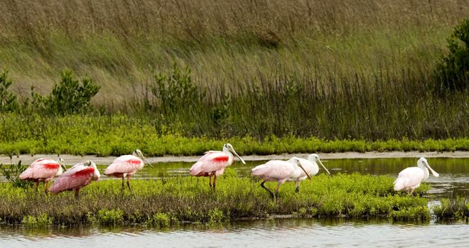 coastal bend wildlife photo contest  2005 kent savage cd 1 raw 072 copy.jpg
