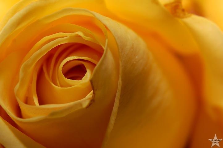 Yellow Core