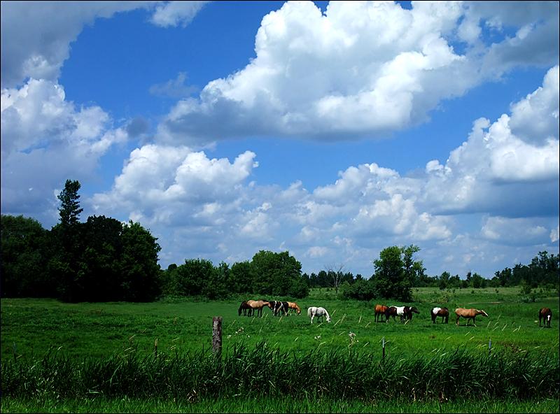 July Ponies