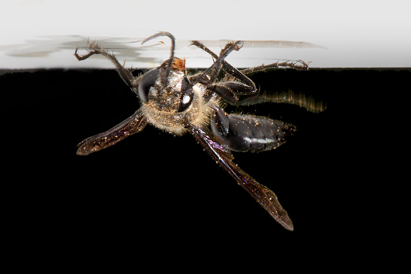 Wasp removes small pieces of material in mouth