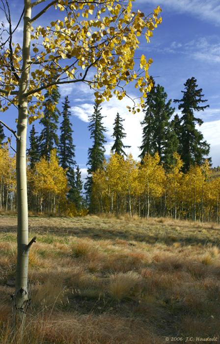 Colorado IMG_5369