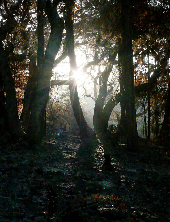 Trees and morning sun