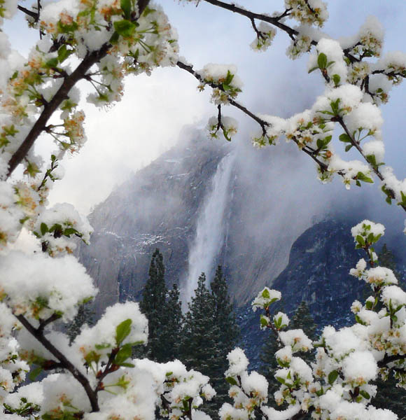 Yosemite Falls through the crabapple tree...same view, different day