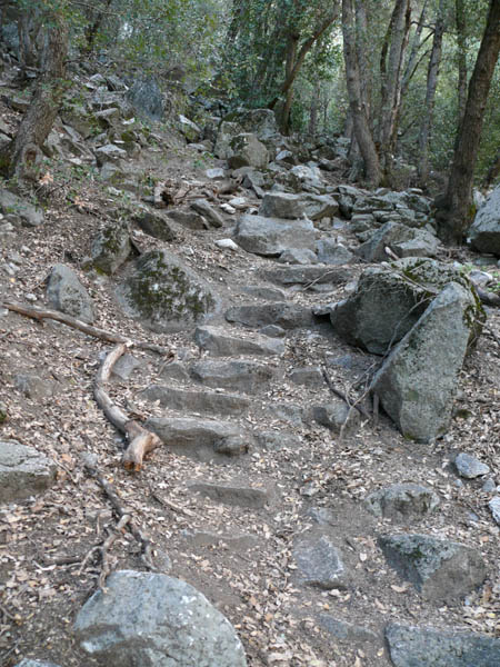 Definitely the trail!