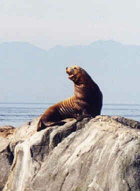 This is a sea lion and not my photograph.
