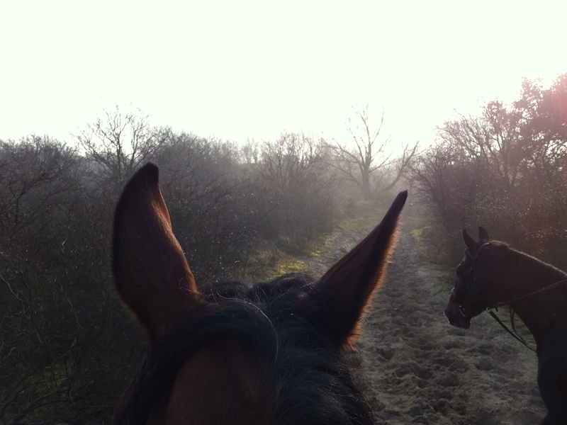 horse ride on a sunny winter day