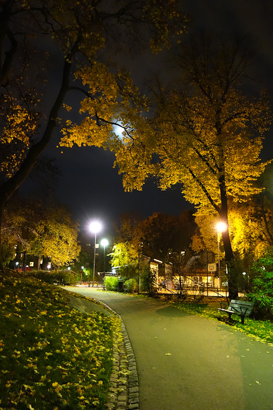 Moon over the park