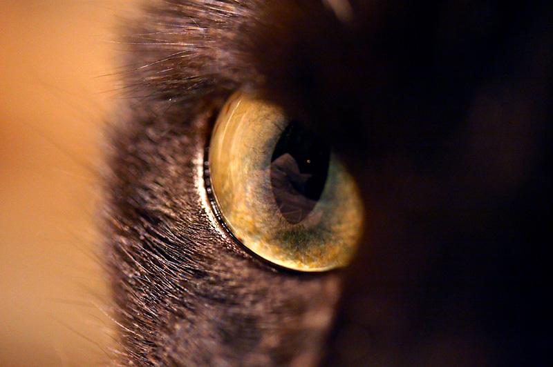 January 12: Cats eye