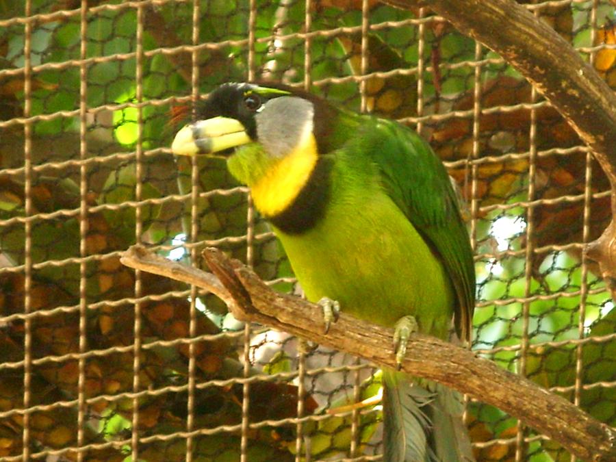 San Diego Zoo 7657.jpg